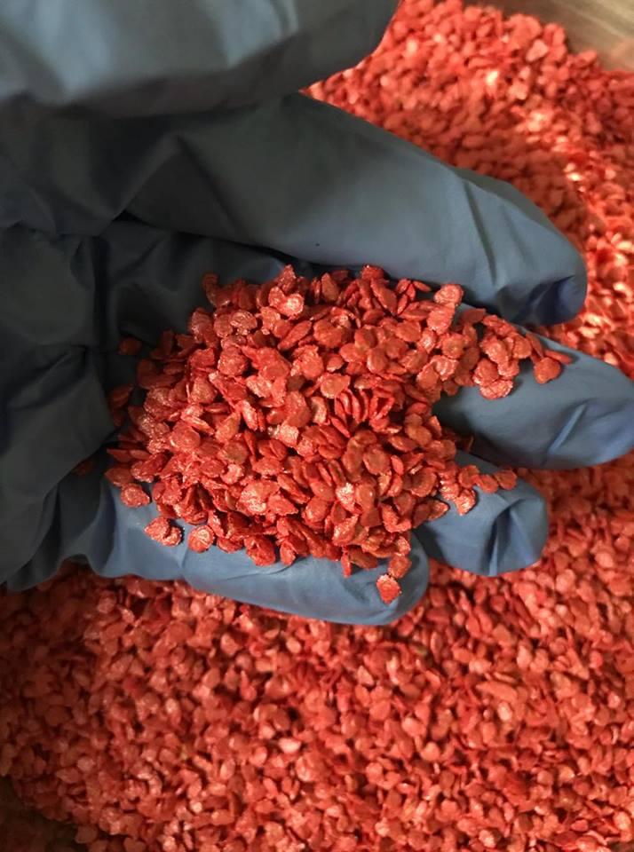 hạt giống cà chua  siêu chịu nhiệt, cà chua F1, thái lan, jupiter 9.0 - 2